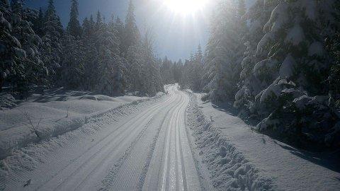 LØYPER: Det er kjørt løyper i Bjørsjøtorpet på Namnå. Traseen går etter skogsbilvei fra torpet og innover mot Sollia.