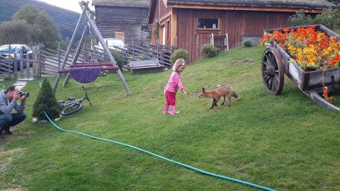 MARIA OG REVEN: Tre år gamle Maria leker med Mikkel Rev.