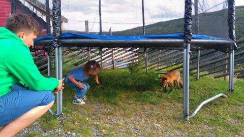 Storebror Ivan (19) og Maria leker med reven under trampolina.