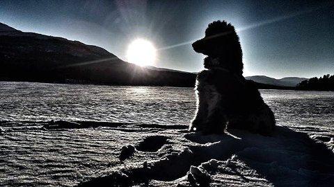 9. Puddel i solnedgang. Foto: Liv Klara Enstad