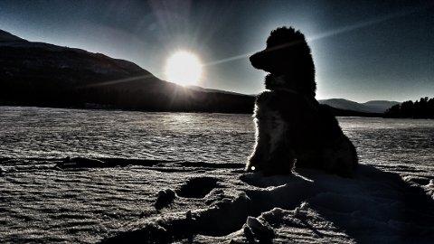 Puddel i solnedgang: Mr. Darcys profil mot solnedgangen over Lesjaskogsvatnet holdt til seier i «Lesernes marsbilder».  Foto: Liv Klara Enstad