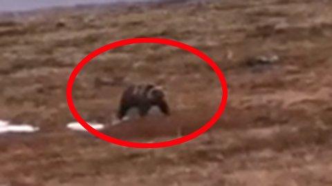 FILMET: Kompisene filmet bjørnen. Se video nederst i saken.