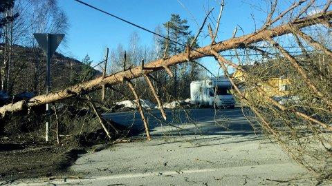 Dette treet blåste over ende i Baklivegen på Jørstadmoen i Lillehammer søndag, 1. påskedag.