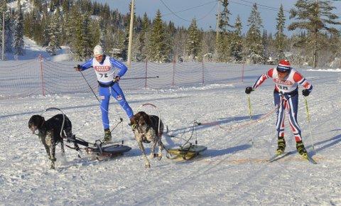 VINNER SPURTEN: Yngve Hoel og Rock (til venstre) spurtslo Nittedal og Eskil Knag på de siste meterne og sikret NM-sølv bak suverene Trysil.