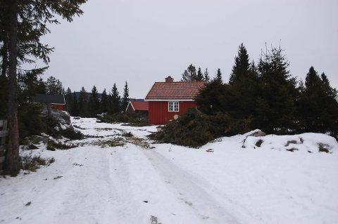 BUSTETE AKKURAT NÅ: På Sagvolden er mange trær felt de siste ukene. Nå foregår oppryddingsarbeidet, forsikrer Harald Kvam i Gran Almenning.