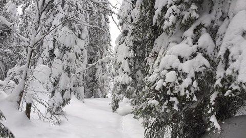 SNØFALL: Til helga kommer det mer snø, ifølge både Yr.no og Storm.no.