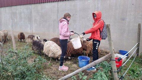 FRA JORD: Mating av dyr på gårdsbesøk.