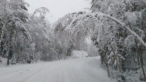 Tirsdag ettermiddag la snøen seg pent langs Bjørkebekkveien i Aremark.