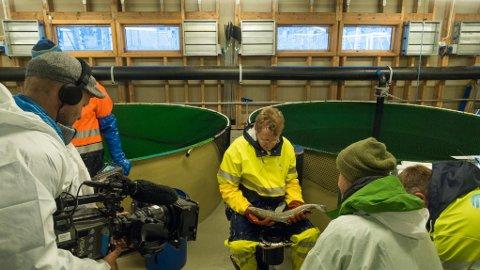 Sima: Håvard Lo fra Veterinærinstituttet blir intervjuet av programleder  Kenneth Bruvik (t.h.), Jan Inge Skogheim er fotograf.