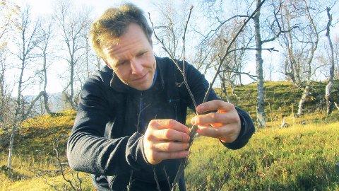 BUSHEN: Ole Petter Laksforsmo Vindstad der han trives best -  på feltarbeid i en skog som har vært utsatt for svært sulten lauvmakk. Foto: Malin Ek