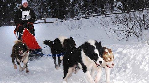 Til vm: Marit Ånes gliste bredt da hun gjorde unna et sprintløp i januar med fire av sine hunder. Hun skal delta i VM med grønalndshundene.foto: per sverre simonsen