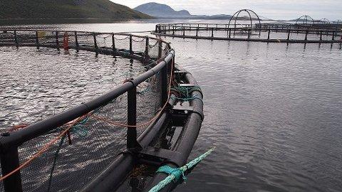 NEI: Vega Sjøfarm får ikke drive oppdrett ved Hysværet i Vega. Det har Fylkesmannen i Nordland bestemt.