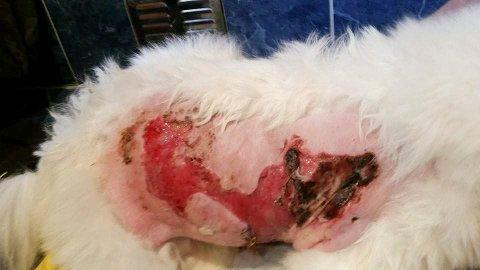 SKADER: Bildet viser skader på Dina etter hendelsen i fjor sommer.