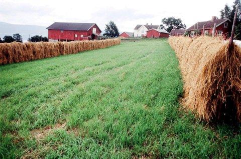 Stadig færre: De siste årene har 235 gårdsbruk på Helgeland forsvunnet.