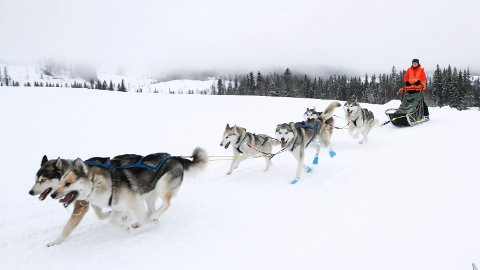 Løypenett: Mosjøen hundekjørerklubb jobber med å samle inn penger for å kjøpe ny snøskuter.  På bildet ser vi en del av løypa på Sjåmoen under årets Herringen Trial.