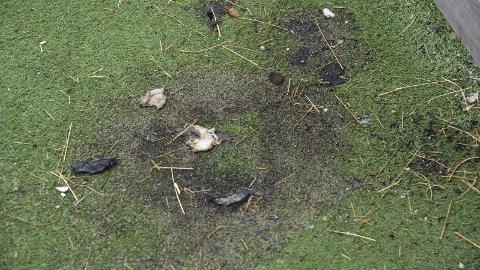 SATT FYR PÅ: Det er noen som har satt fyr på tørt gress på innsiden av ballbingen på Kronstad.