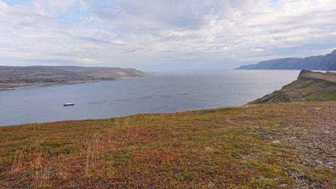 SYLTEFJORD: Her ser vi Syltefjord, med merdeanlegget til SalMar ASA til venstre i bildet.