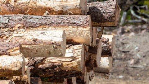 PRISENE SYNKER: Barkebiller førte til redusert uttak av tømmer i Canada. Det ga større etterspørsel etter europeisk tømmer til trevarer, og økte priser. Nå synker prisene igjen. Foto: Terje Pedersen (NTB)