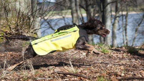 Stadig flere hundeeiere velger å sikre hunden med en ulvevest. Foto: Dogtech