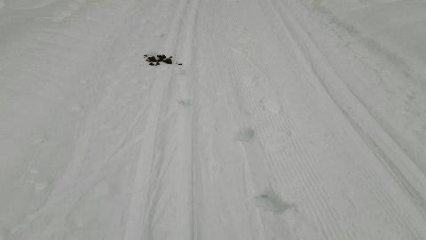 Drittføre: Midt i skisporet gjorde hesten fra seg, uten at rytteren fjernet ekskrementene. Foto: Privat