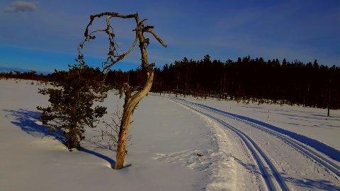 SOL OG NYSNØ: Det ligger an til en fin skihelg på Mangen etter nysnø natt til fredag og varslede minusgrader i helgen.