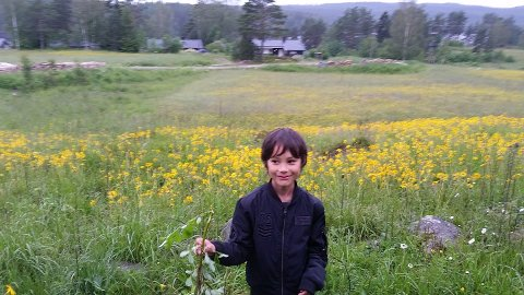 SPESIELL BLOMSTERENG: Her er Petter Simonsens bonusbarn, Milo Nordseth fotografert foran blomsterenga på Lysaker på Setskog, med mye gul Solblom på. FOTO: LIV-ANITA HÅBYE
