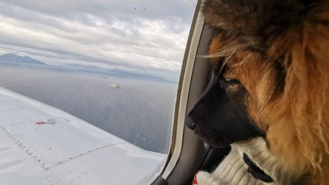 TIL DYRLEGEN: Her sitter Felix på vei tilbake fra Bodø etter å ha fått ut kroken fra ansiktet.