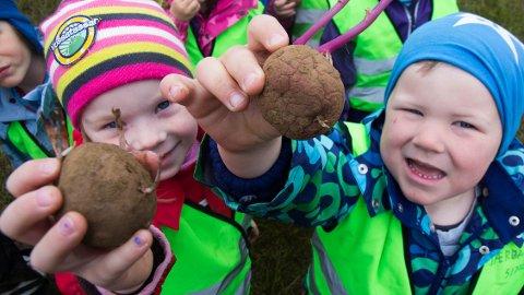 KLAR, FERDIG, POTET! Hilde Eeg Tunes og Elias Høyland Joranger fra Jærbarnehagen er, sammen med 350 andre barnehagebarn, klare for å sette poteter på Særheim.