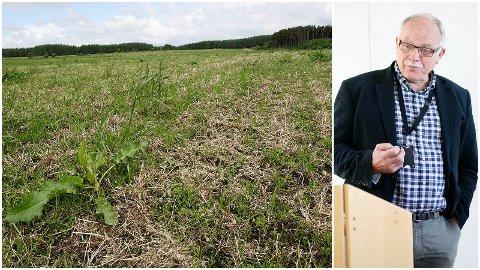 Bildet av vinterskadd eng er tatt i juni 2013. Hadle Nevøy, landbruksdirektør hjå Fylkesmannen i Rogaland, strekte seg langt for å løysa utfordringane. For langt, ifølgje Landbruksdirektoratet. (Arkivfoto: Jorunn Erga Steinsland/Åge Bjørnevik)