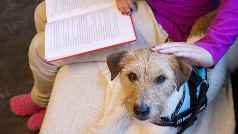 Om eit barn strevar med å lesa høgt, kan det å få klappa på hunden Mac hjelpa til med å slappa av i lesinga. Mac er ofte med på lesetrening på bibliotek og skule.
