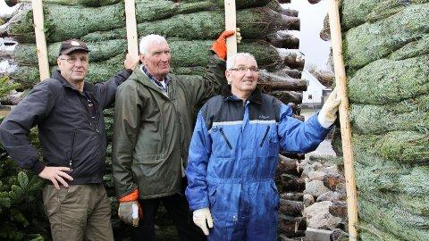 Juletreveteranane Arne Studsrød (f.v), Alf Lima og Brynjulv Salte håper å selje minst 600 juletre til inntekt for Nærbø Idrettslag.