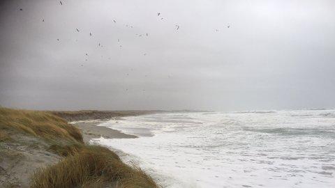 Ronny Time var på Orrestranda lørdag morgen. Der var det ikke mye strand igjen. Sjøen har slukt det meste av strandlinjen.
