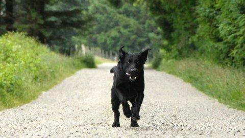 Hunden Å2 er nå pensjonist fra jobben i staten som narkotikahund, men må ha et svært aktiv pensjonisttilværelse skan han ha det godt.