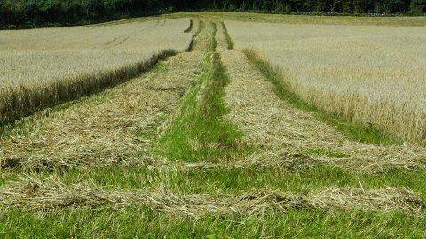 Landbruksminister Jon Georg Dale (Frp) legg til side eit forslag frå DSB om å greie ut nyetablering av eit kornlager.
