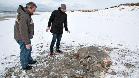 Alf Tore Mjøs (t.v.) og Jørgen Rosvold er glade for tips om «blobber» på jærstrendene –selv om det kan lukte ganske så stramt til tider.
