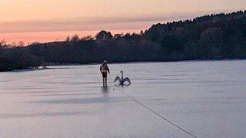 PÅ ISEN: Ei svane vart redda av ein brannmann.