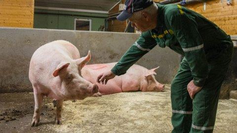 Grisebonde Leiv Rugland er svært positiv til innstraming, og trur det vil gjera alle grisebønder skjerpa.