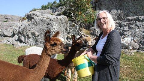 Laila Luteberget kjøpte fem alpakkaer i 2014. I dag har hun og ektemannen Asgaut Steinnes 15 til sammen.