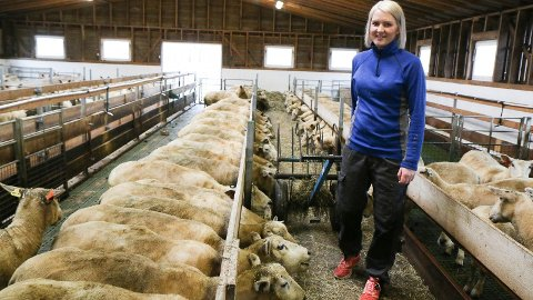 SAU: Tonje Nærland Kloster driv gard med gris og sau. Her er ho hjå dei 150 vinterfôra sauene.