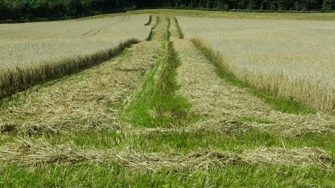 Kravet frå bøndene legg opp til ei satsing på korn og grønt.