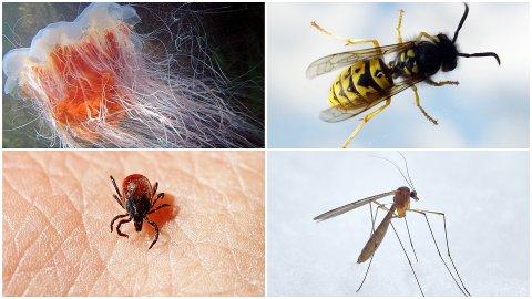 PLAGSOMT: Ikke alle setter pris på møter med brennmanet, veps, flått og mygg.