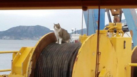 Den franske skipskatten trivst om bord på båtane. (Foto: Johannes Eide)