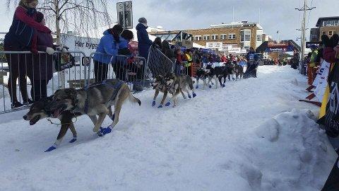 ÅRETS NYKOMMER: Terje Erik Loftsgård imponerte stort på 500 kilometeren i Finnmarksløpet.foto: team loftsgård