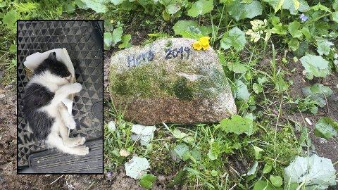 HERO: Mona Ruud valgte å ta med den døde kattungen hjem for å gi den et siste hvilested. Graven har fått en gravstøtte, og Ruud ga katten navnet Hero, som står for helt.