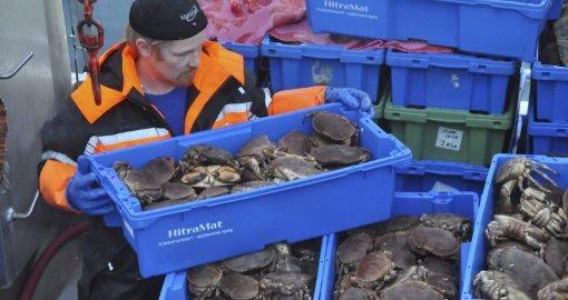 Krabbene oppbevares i kasser om bord før de sendes til HitraMat