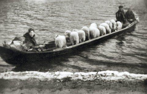 Sauefrakting i elvebåt på Altaelva. Kristian og Magna Wisløff er med. Magna sittende til venstre og Kristian Wisløff en av de til høyre.År  ca 1930 -1940.