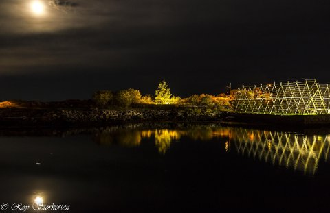 Hjellene og treet på Svinøya lyser.