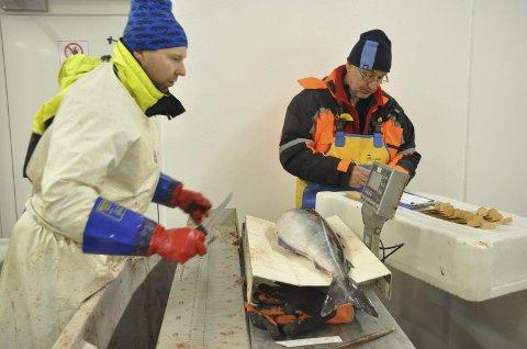 VEIES: Kjønn, lengde og vekt på fisken blir registrert.
