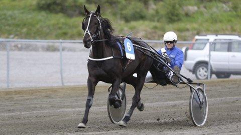 Andreplass: Flying Credit S.S kjørte inn 25.000 kroner da det ble andreplass under V75 i Harstad.»Foto: Robin Andreassen