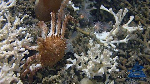I korallrevene er det yrende liv.
